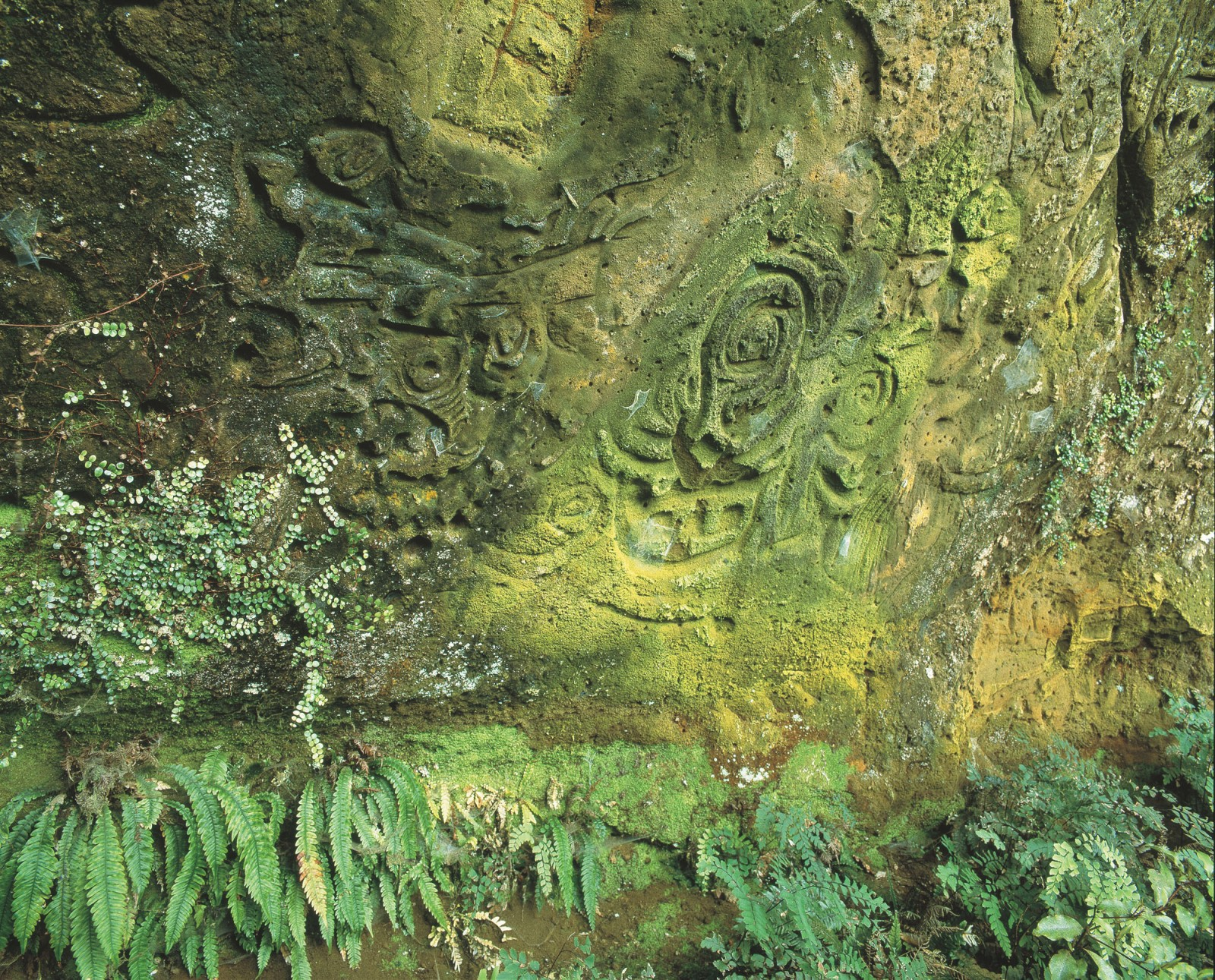 "In Waverley, Taranaki, a frieze of spirals, manaia, carved lizards and richly interwoven anthropomorphic forms cover a 20 sqm sandstone bank, the southern-most rock art site in the North Island. First noted by Europeans in 1895, the degradation of these carvings has been recorded but is ongoing. A conservator's report in 1993 recommended upgrading the barrier, stabilising erosion, installing signage and setting up a monitoring programme. None of these measures have been implemented. Today the impact of water, weathering, vegetation and vandalism is obvious. Part of the bank has slipped, tree roots bar access and the existing barrier fence is damaged. ""It's important for people to see it,"" says current farm owner John Hickey, ""but something needs to be done to make it more accessible."" The local Rotary club is now working on a project to improve access and security."