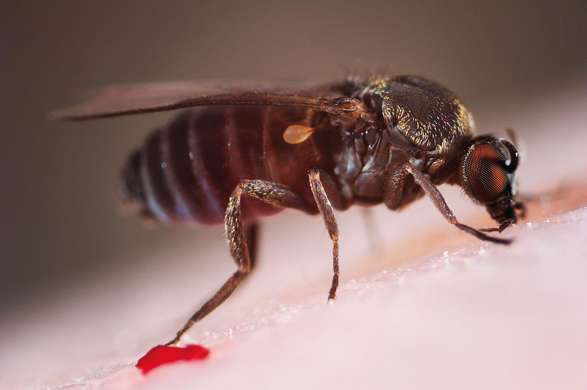 jenis nyamuk dan bahayanya