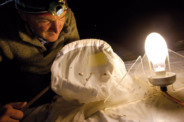 "Brian Patrick examines nocturnal arrivals that gather on his 3172nd light-trapping expedition since 1970—this one at Canterbury's Kaitorete Spit. The expeditions are either lone vigils or sociable nights; he and photographer Rod Morris whiled away the night spinning yarns around their sodium light ""campfire""."