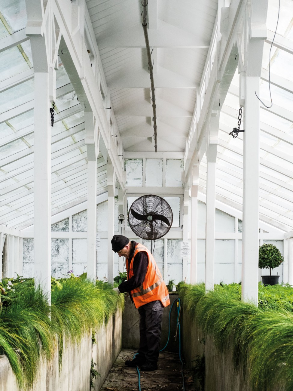 Nearby, horticulturalist Colin Bradshaw—who has worked in the Domain nursery for 47 years— tends plants in one of the vintage glass houses of the oldest continually operating nursery in the country.
