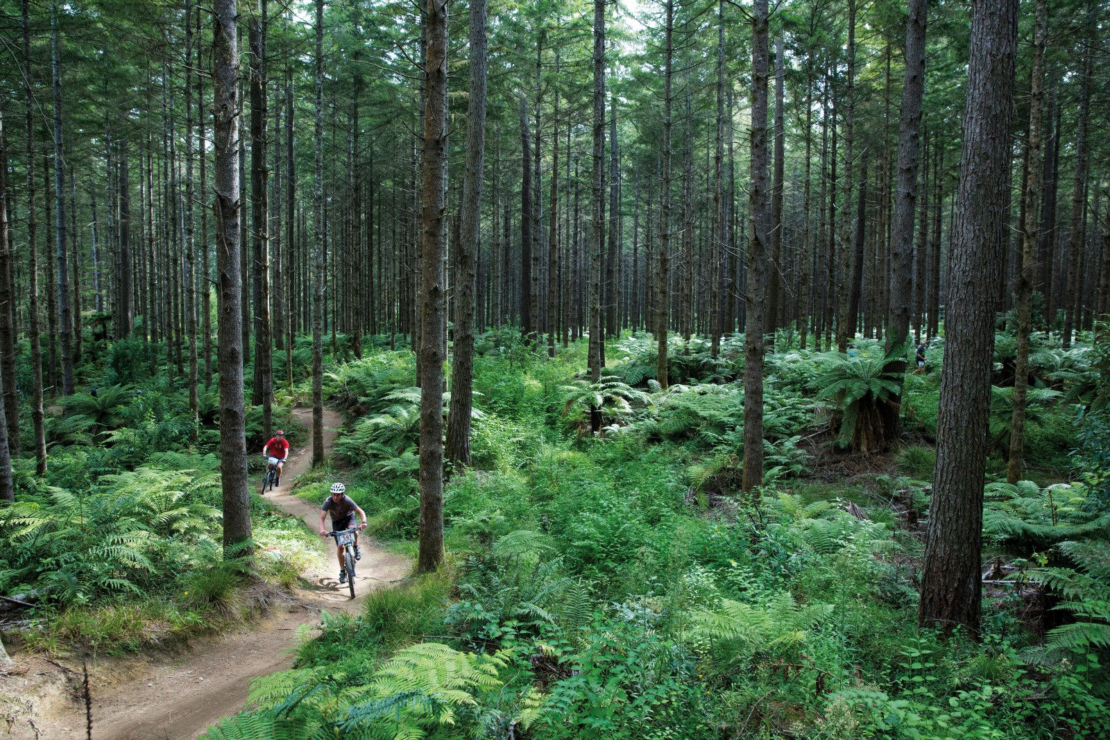 A rider from the team JagerBums (foreground) cruises through the Creek Trail, built by Fred Christensen in 1995 and one of the first trails in the Whakarewarewa Forest. While some of the trails wind through stands of eucalyptus and mighty redwoods, Creek Trail meanders through pines. Malcolm 'Red' McHale, a 66-year-old warden with the Department of Corrections has been taking work crews into the forest since 1994, maintaining old trails and building new ones.