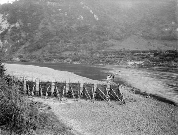 New Zealand's rivers once ran dark with migrating lampreys, seasonal fare for Maori. Structures were erected on tributaries and main river courses alike, creating gates through which migrating lamprey would need to pass on their way upstream. The increased speed of the current through gate would direct the eels into a hinaki, a trumpet-shaped basket of green flax.