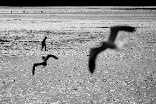 Kids, a beach, some noisy gulls—there may be no more idyllic New Zealand summer scene. But the idyll is threatened—from without, in the form of exotic invaders and climate impacts, and from within, with rising levels of sediments, nutrients and contaminants pouring off the land. The sea has never been as impervious to human impact as we had thought. Increasingly, our footprint leaves its mark, and the tides cannot erase it. How lightly can we tread to sustain our encircling seas?