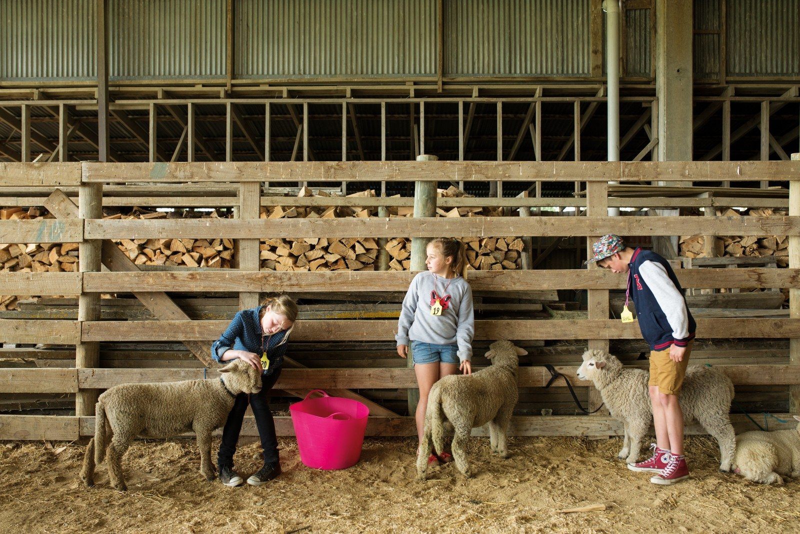 Margot and Annie Ferguson and Ben Oakly wait for their age group to be called to the Clareville Showgrounds ring to compete at the South Wairarapa Group Lamb and Calf Day, near Carterton. Many children attend multiple shows with their animals during the season—their own pet day at Kahutara School as well as South Featherston School, the South Wairarapa Group Lamb and Calf Day, and the A&P Show. Shows represent long periods of waiting for the children, and moments of high drama—the sharp pain of being stomped on by a calf, shiny trophies awarded and escapee lambs tackled.