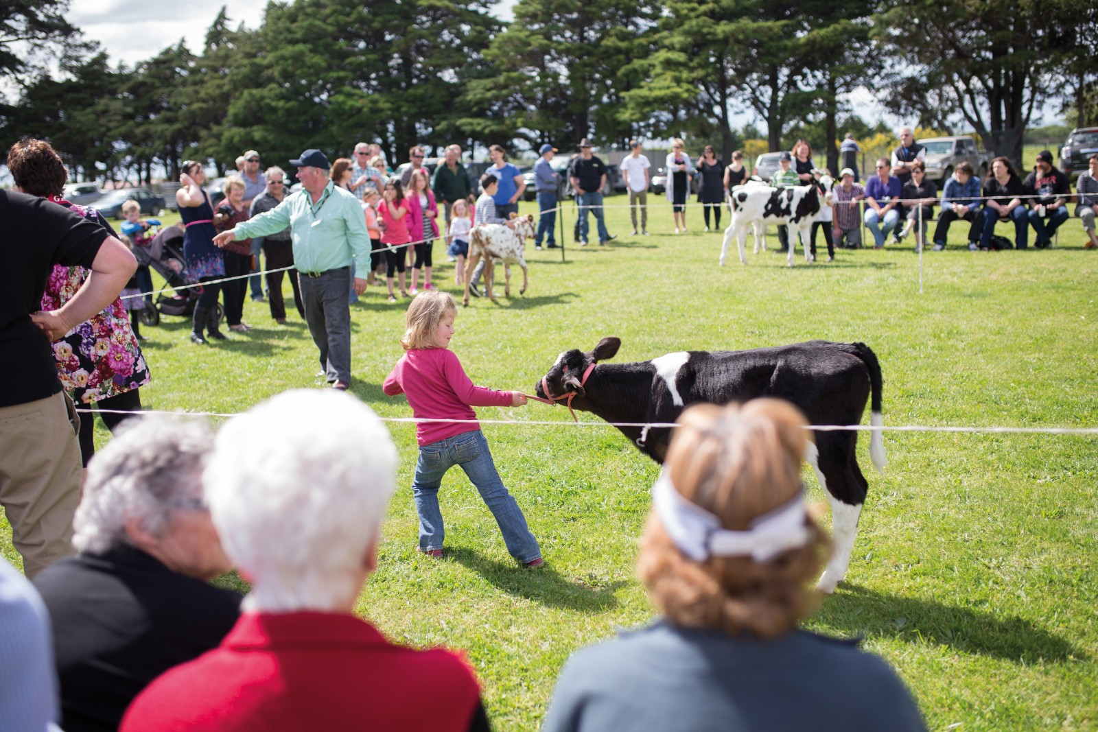 A competitor pulls her calf into the ring during the ring-craft category at the South Featherston School pet day. Kahutara School principal Clare Crawford estimates that 90 per cent of Kahutara School's students have parents who are involved in the farming industry.Calving and lambing season is a busy time for farming families, and pet days provide the opportunity for the community to take time out, get together and support their young competitors.
