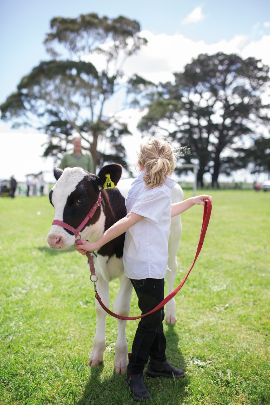 At the South Featherston School pet day, Zara Williams (6) holds her calf Demi while waiting to enter the competition ring. Zara, who won trophies at the last two shows, follows in the footsteps of her parents who breed pedigree cattle, passing on farming knowledge from one generation to the next.