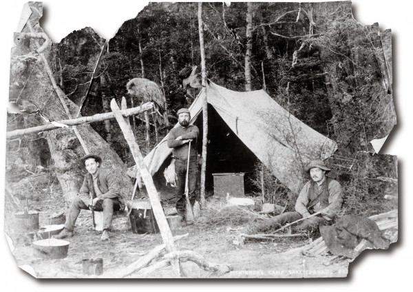 Kakapo were once abundant throughout New Zealand's two main islands (and possibly Stewart Island) and featured regularly in both Maori and European backcountry cuisine, but by the time this photograph of an explorers' camp in Fiordland was taken in 1888 (with Quintin Mackinnon, of Milford Track fame, in the centre, and an obliging kakapo perched above the fireplace), almost no none remained in the North Island. Even in the South Island, the kakapo's best days were well behind it.