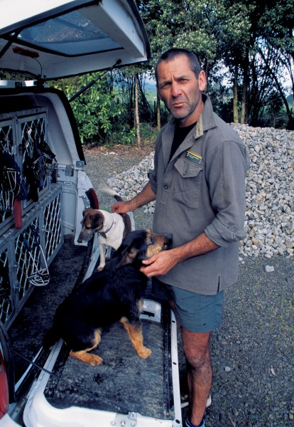 Trained dogs--such as this pair owned by Scott Theobold of Trounson Kauri Park--are also being used to sniff out stoats, especially the breeding females which are particularly difficult to trap.