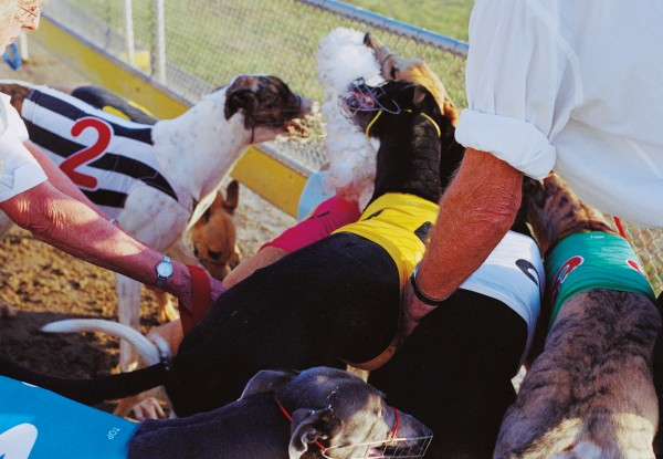 """At the end of races, dogs are allowed a brief go at the lure—""""on the bunny""""."""