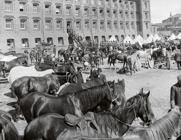 Feeding the hundreds of horses brought in by the specials proved quite a task, and the stench from extra piles of horse manure was a source of complaint. The city's rubbish collectors refused to clean up after the specials. Once the wharves had been retaken from the strikers, some specials, under guard, began loading and unloading ships.