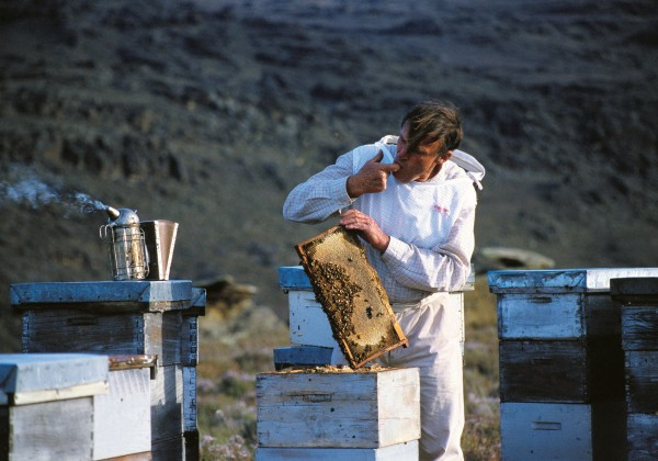 Ernest Adamson's family have been producing honey in Otago for well over 100 years and today Ernest is one of a dozen beekeepers who specialise in thyme honey.