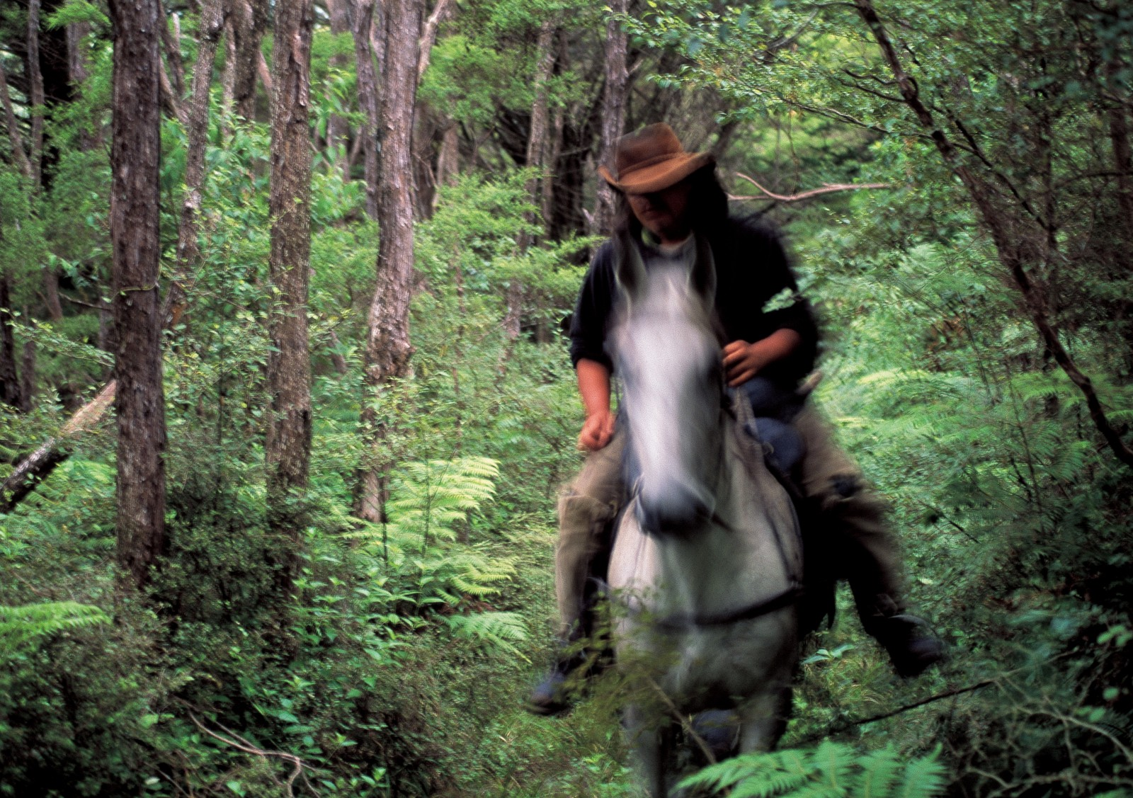 Contemporary Maori tourism enterprises deliver a multitude of experiences for visitors, from hangi to horse trekking, such as this adventure in the East Cape region near Rangitukia.