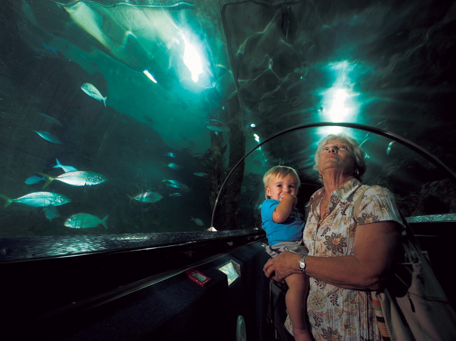 Kelly Tarlton's Underwater World opened in January 1985 and became an instant success. Millions have now passed through its doors and it is considered the country's leading tourist attraction.