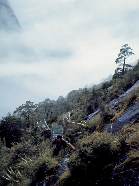 Contrary to appearances, these '70s kakapo hunters were not carrying supermarket trolleys but cages in which to secure their elusive quarry.