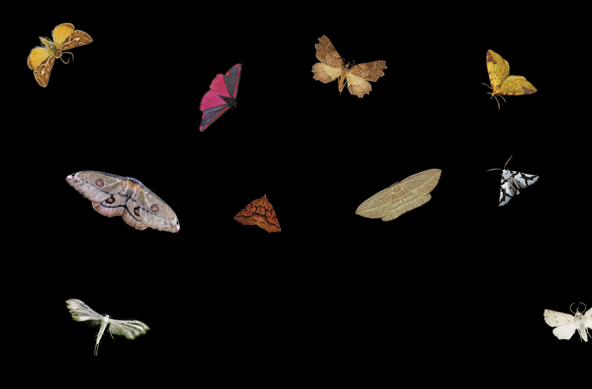 Night moves: The world of moths | New Zealand Geographic