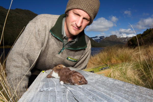"""Our new focus is on predator control,"" says ranger Martin Genet. ""Particularly the stoat, which is the takahe's greatest foe."""