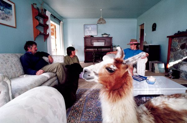 Is it a goat, a rabbit or an afghan hound? No, it's just the family llama putting his feet up in the Benges' lounge after a hard day in the field!
