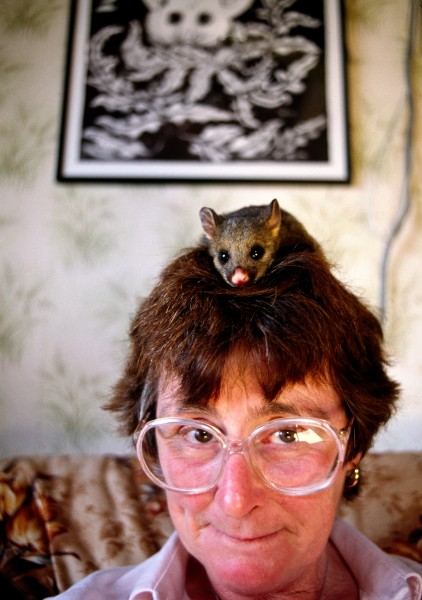 "Pest or no pest, to animal lovers an orphaned possum is something to care for and nurture, not discard. Hazel Petch's world often revolves around the feeding schedule of her latest charge. ""It's not their fault they're a pest,"" she says."