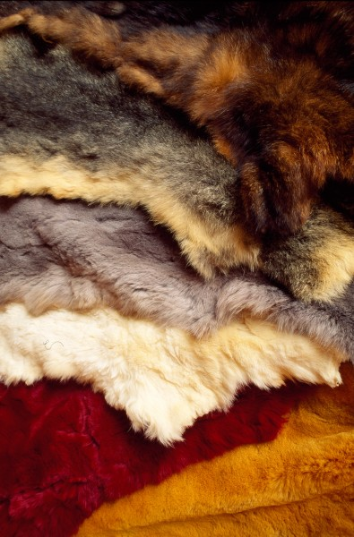 Stack of dressed skins in the warehouse of New Zealand's largest fur exporter, Taimex Trading, includes natural dark and grey fur (on top) and a variety of shorn and dyed examples below.