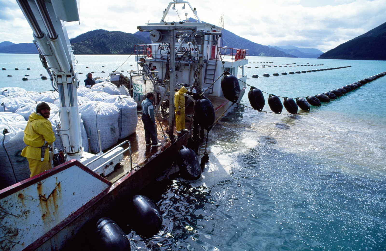 "The country's largest mussel harvester, Pelorus Trader, works its way down the rows of floats of a Marlborough mussel farm. Shellfish-laden growing ropes or ""droppers are unclipped and brought aboard while the backbone ropes are left in place, ready to support the next crop. On board processing includes removal of unwanted shellfish (in Marlborough, particularly the competing blue mussel), cleaning encrusting organisms off the shells with high-pressure water, and packing."