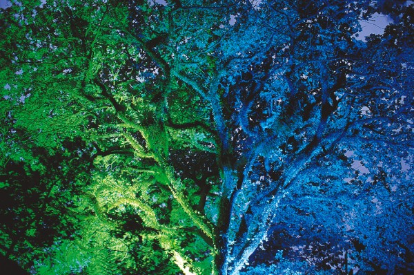 Every night over summer, concealed lights illuminate trees and fountains, transforming Pukekura into an enchanted garden. For many residents of New Plymouth, though, the park needs no special effects to enhance its attraction. It is a place dear to the city's heart.