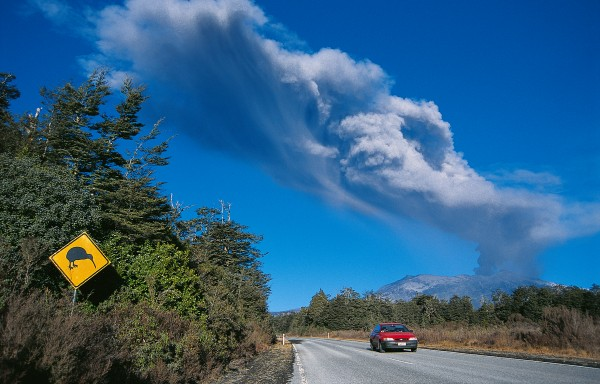 As with many small animals, kiwi sometimes fall victim to motor vehicles. The Automobile Associa tion now erects signposts at vulnerable sites, such as the National Park area, here witnessing one of Ruapehu's in termittent eruptions.