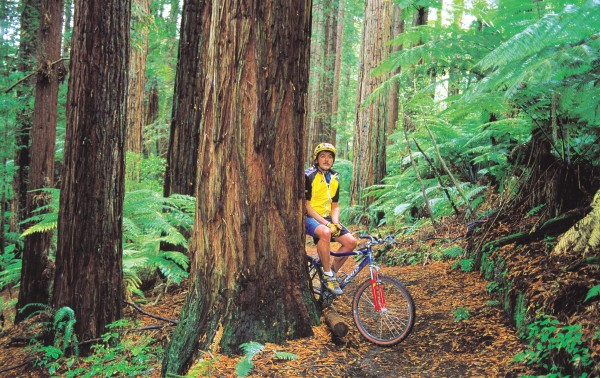 """Fredwoods,"" some people call the redwood forests of Whakarewarewa, in Rotorua—a tribute to Fred Christensen, who was instrumental in building bike tracks in these woods."