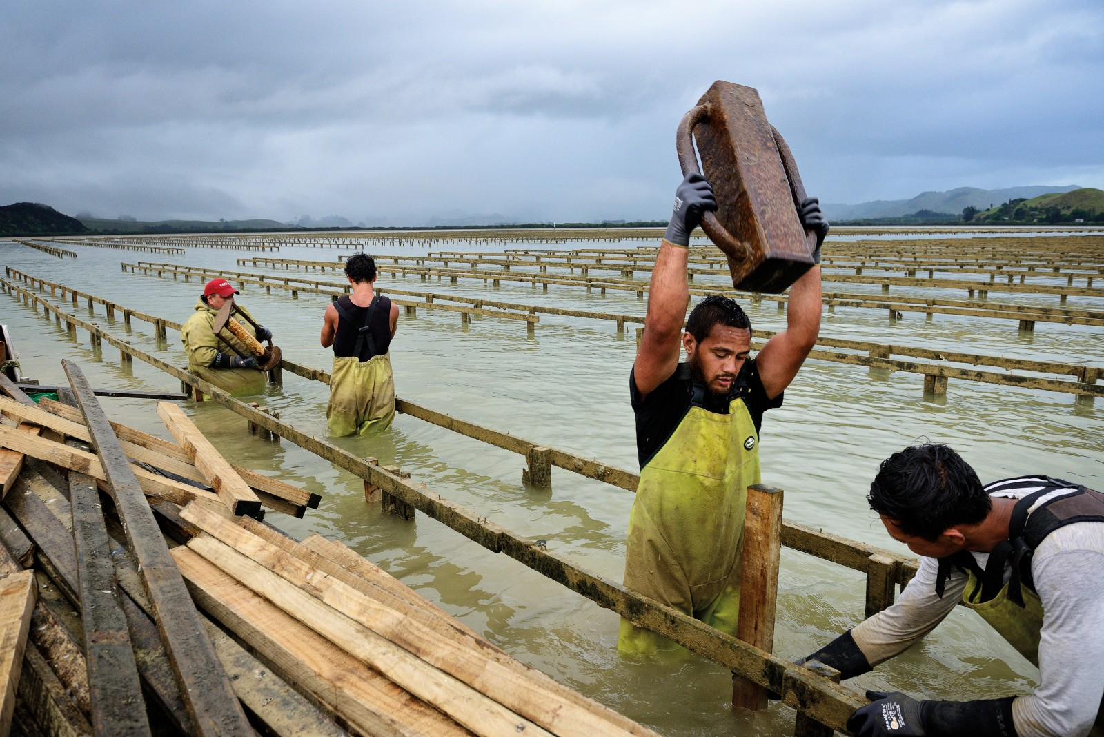 Strong arms and a steady eye are needed by Campbell Davies-Takimoana as he rams new posts into the sediment at Pacific Marine's oyster farm at the head of Whangaroa Harbour. Aquaculture is an important industry in the area, but not everyone is keen to see it expand. Some residents would prefer to see the harbour become a maritime park, figuring that tourism would be a better long-term investment.