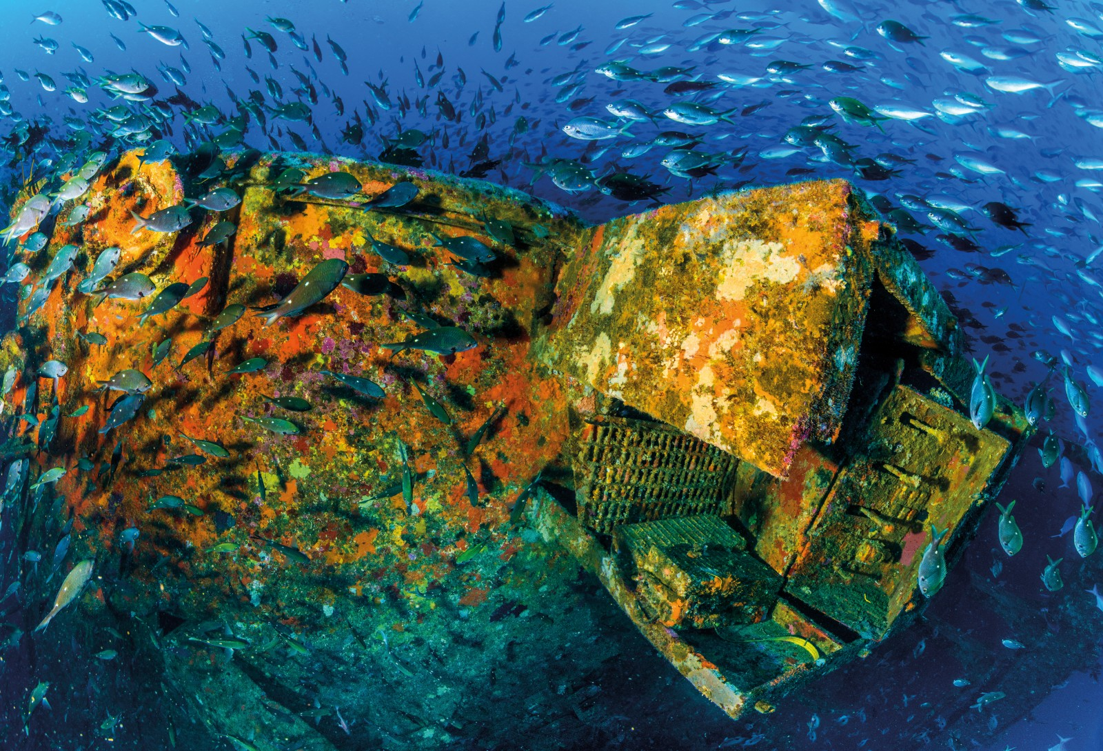The stern section of the wreck sits in about 56 metres of water, with the top in 33 metres of water, covering about two per cent of the reef area. It's now festooned with colourful soft corals and algae, and swarming with demoiselles and larger pelagic fish such as kingfish. This image is a composite of six images taken with a very wide angle lens and stitched together to create a panoramic view.