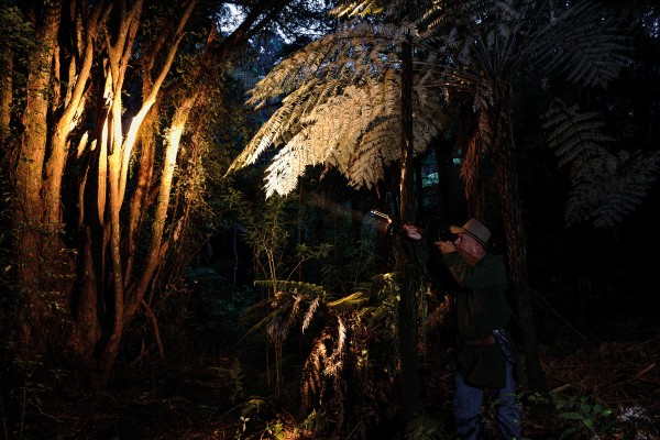 Right, former possum hunter Stefan Seitzer defends the bush-covered land he owns in Ngunguru, Northland, spotlighting a tōtara to check for possum activity.