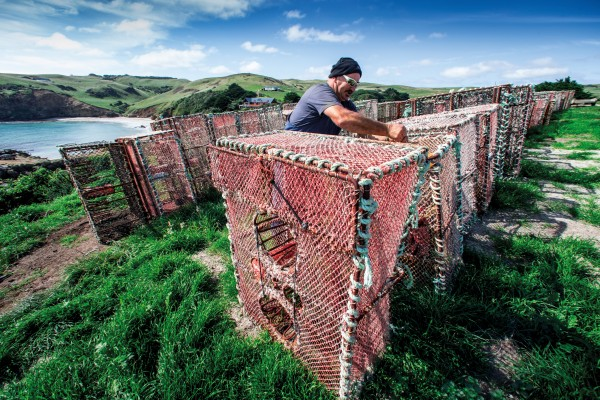 On Pitt Island, south-east of the main Chatham Island, fisherman Chip Lanauze repairs crayfish pots on the cliffs above Flower Pot Bay.