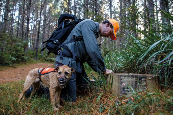 Conservation Dog team Andrew Blanshard and Tike stop to check a trap on a forest road at the southern end of the island, one of 298 in the island's defences.