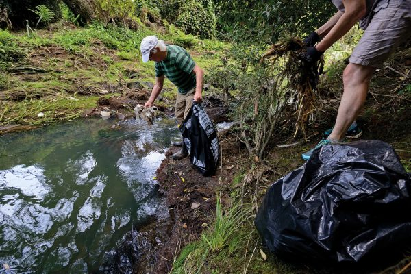 Local residents are the eyes, hands and hearts of urban streams, taking upon themselves the role of caretakers and guardians. At a working bee at Te Auaunga/Oakley Creek, volunteers pick rubbish from the stream banks—a neverending task in this densely populated catchment.
