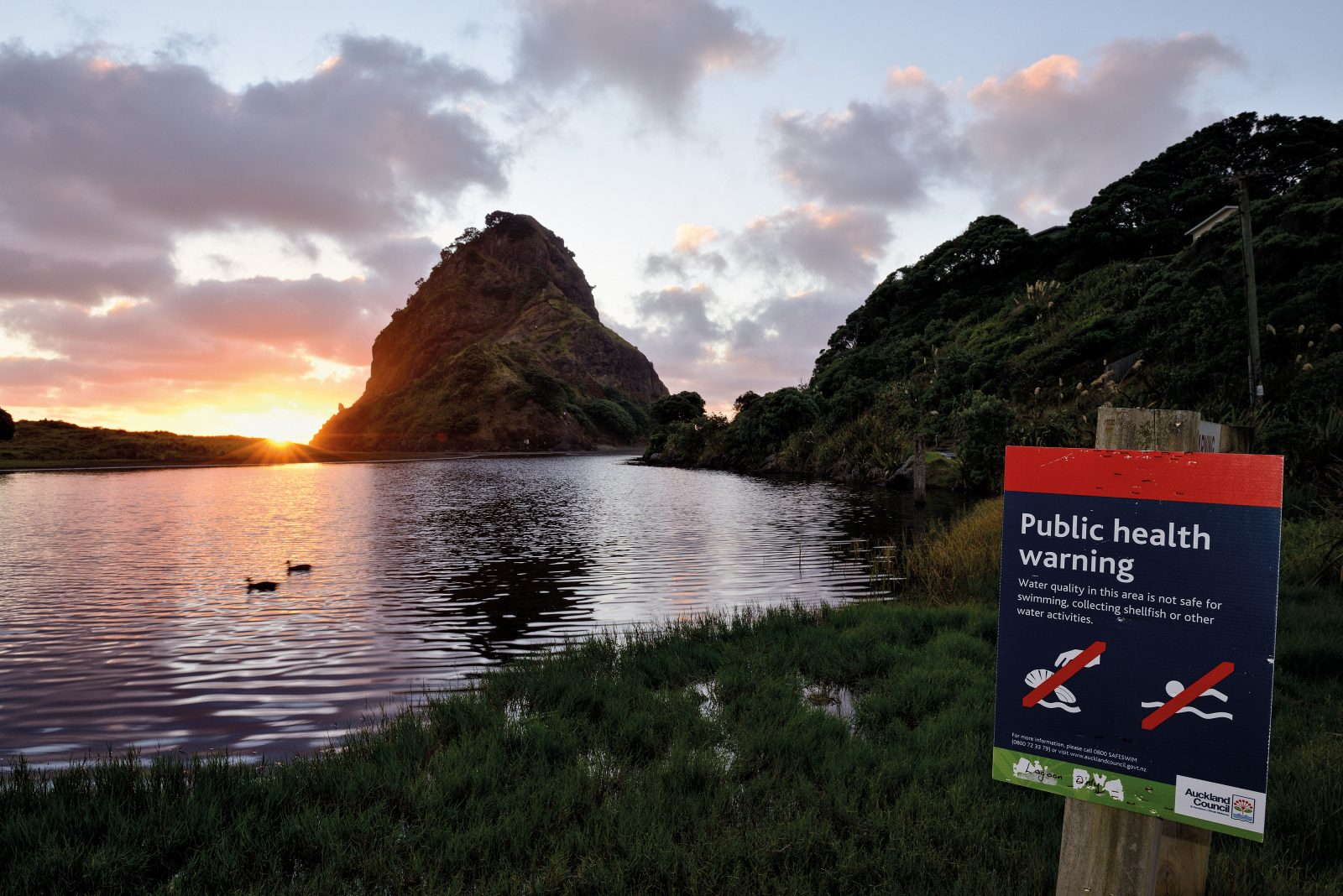 A bucolic scene belies a bacterial menace at a lagoon behind the famous surf beach of Piha. In remote beach communities, the main threat to swimmability is leaking septic tanks. The council is trialling a scheme to lend money to homeowners to upgrade or replace their sewage systems.