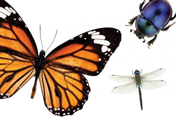 Insectpocalypse now